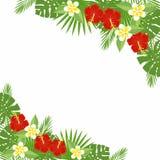 Tropiska blommor och sidor - hibiskus, palmträd, Monstera, plumeria Arkivbilder