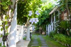 Tropiska blommor på en suddig bakgrund av trädgården och sommarhuset Arkivbilder