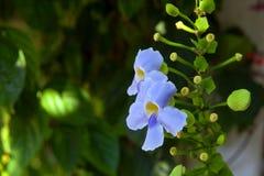 Tropiska blommor på en suddig bakgrund av trädgården och sommarhuset royaltyfri bild