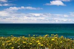 Tropiska blommor som förbiser havet Fotografering för Bildbyråer