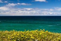 Tropiska blommor som förbiser havet Arkivfoto