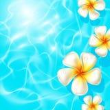 Tropiska blommor som svävar på klara blått, bevattnar Royaltyfri Bild