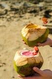 Tropiska coctailar som tjänas som i kokosnötter Royaltyfri Fotografi