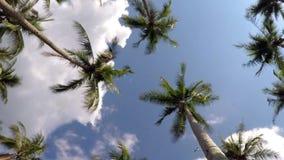 Tropiska djungelpalmträd mot blåttsemester stock video