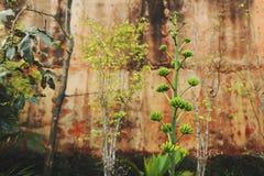 Tropiska exotiska växter på den stora Buddhabergväggen i Phuket Thailand Arkivbilder