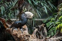 tropiska fåglar Royaltyfria Bilder