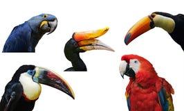 tropiska fåglar Arkivbild