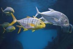 Tropiska fiskar Arkivfoto