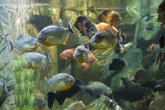 Tropiska fiskar Royaltyfria Foton