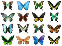 Tropiska fjärilar arkivfoto