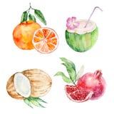 Tropiska frukter f?r vattenf?rg stock illustrationer
