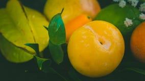 Tropiska frukter på tabellen Royaltyfri Fotografi