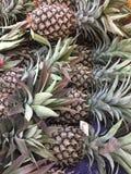 Tropiska frukter Singapore Royaltyfri Fotografi