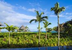 Tropiska gräsplaner på kusten Arkivbild