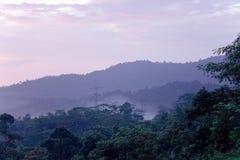 tropiska gröna kullar Arkivbild