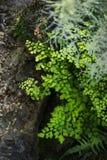 Tropiska grönska-, murgröna- och ormbunketjänstledigheter, naturbakgrund Royaltyfria Bilder