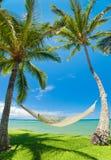 tropiska hängmattapalmträd arkivfoto