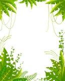 tropiska härliga växter för bakgrund Arkivbild