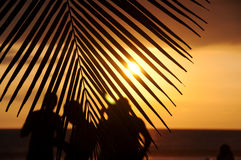 tropiska iakttagare för solnedgång Arkivfoto