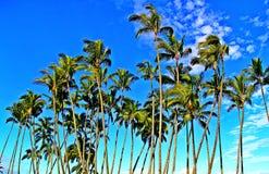 Tropiska kokospalmer i paradiset Royaltyfria Bilder
