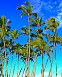 Tropiska kokospalmer i paradiset Royaltyfri Fotografi