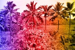 Tropiska landskap, gömma i handflatan dungar, risfält, jordbruksmarker med tropiska färger Arkivfoto