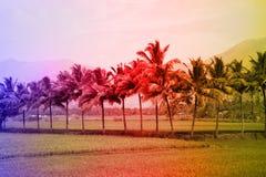 Tropiska landskap, gömma i handflatan dungar, risfält, jordbruksmarker med tropiska färger Royaltyfri Foto