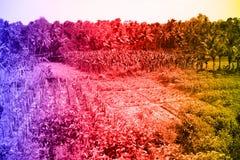 Tropiska landskap, gömma i handflatan dungar, risfält, jordbruksmarker med tropiska färger Arkivbild