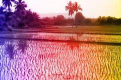 Tropiska landskap, gömma i handflatan dungar, risfält, jordbruksmarker med tropiska färger Royaltyfri Bild