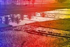 Tropiska landskap, gömma i handflatan dungar, risfält, jordbruksmarker med tropiska färger Royaltyfria Foton