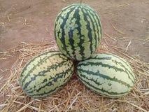 Tropiska Marocko för Bio grön vattenmelon bio mat och frukter Arkivfoton
