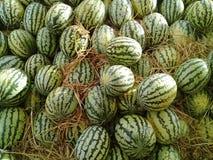 Tropiska Marocko för Bio grön vattenmelon bio mat och frukter Arkivbilder