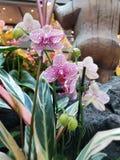 Tropiska orkidér, i att plantera arkivfoto