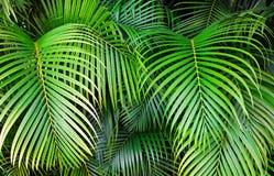 Tropiska palmblad, bakgrund för modell för djungelblad sömlös blom- Fotografering för Bildbyråer