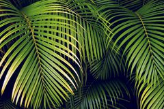Tropiska palmblad, bakgrund för modell för djungelblad sömlös blom- Arkivbilder