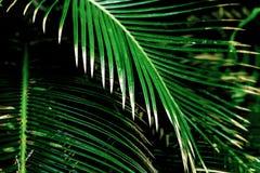 Tropiska palmblad, blom- modellbakgrund Royaltyfria Foton