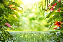 Tropiska palmblad, blomma och vattenfall arkivbilder