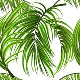 Tropiska palmblad, djungel lämnar den sömlösa vektorn blom- sömlös modellbakgrund Royaltyfria Bilder