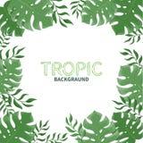 Tropiska palmblad för sommar på en vit bakgrund Fotografering för Bildbyråer
