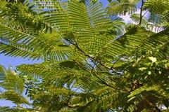Tropiska palmblad med blå himmel, abstrakt begrepp Fotografering för Bildbyråer