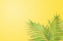 Tropiska palmblad på gul bakgrund Minsta natur Summe stock illustrationer