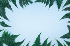 Tropiska palmblad p? bl? bakgrund arkivbild