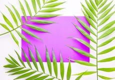 Tropiska palmblad p? lila och purpurf?rgad bakgrund Minsta begrepp Sommar i stil dagleafen g?mma i handflatan taget soligt plante royaltyfri bild