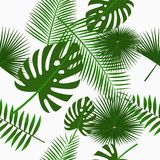 Tropiska palmblad sömlös modell, bakgrund med djungelbladet Bakgrund med exotiska växter vektor Arkivbilder