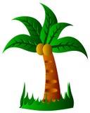 tropiska palmträd Fotografering för Bildbyråer