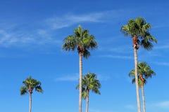 Tropiska palmträd för höghus royaltyfri fotografi