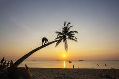 Tropiska palmträd för paradisstrandsolnedgång Royaltyfri Fotografi
