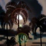 Tropiska palmträd för stormen Solstrålar illustration stock illustrationer