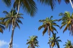 Tropiska palmträd, himmel och måne Arkivbild