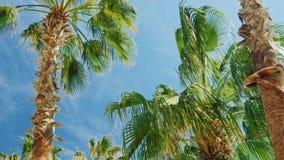 Tropiska palmträd mot himlen lager videofilmer